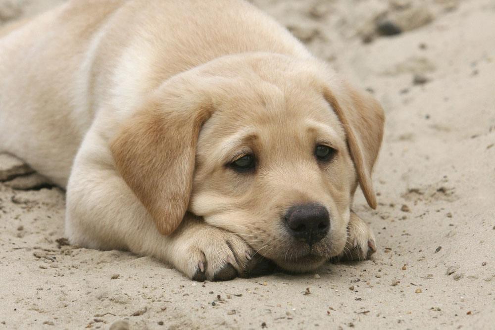 怎么给狗狗营造良好的心理素质